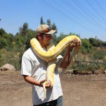 serpiente cumpleaños 2