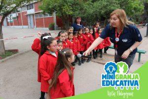 mini granja educativa chile 10