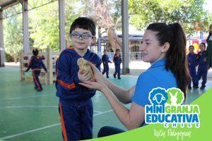 mini granja educativa chile 4