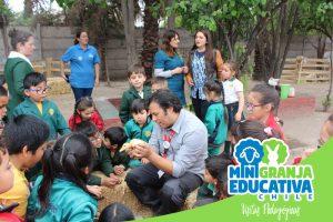 mini granja educativa chile 9