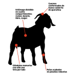 características cabra (1)